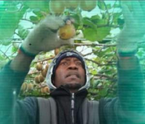 seasonal_workers
